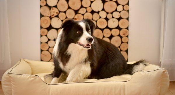 legowisko dla psa beżowe 1