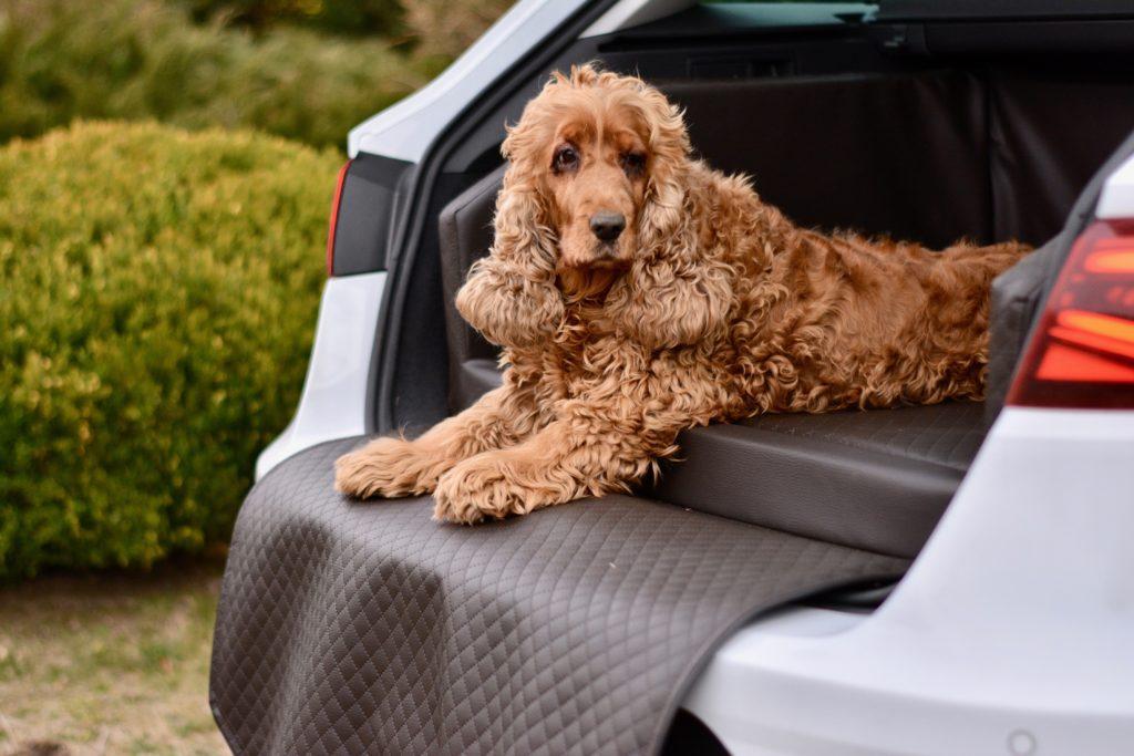 Autohundebett für Kofferraum